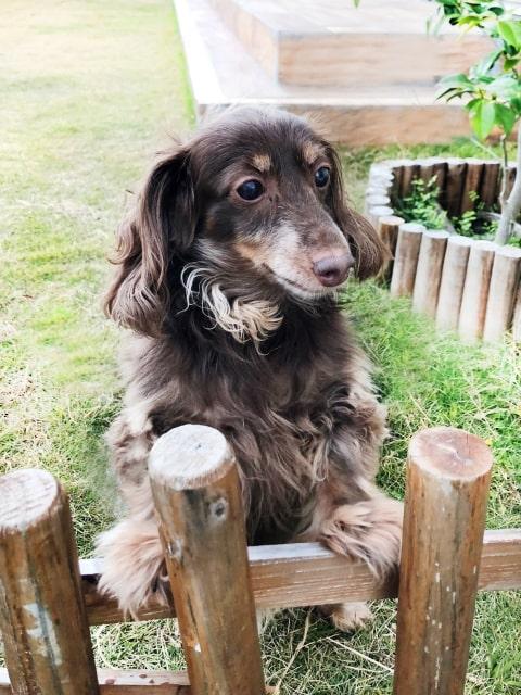 愛犬が脱走しない機能的なお庭