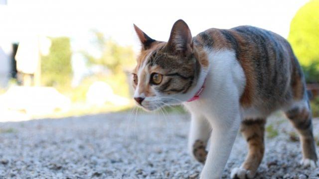野良猫避けのエクステリア