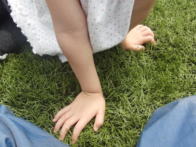 子供が遊べるお庭の芝生