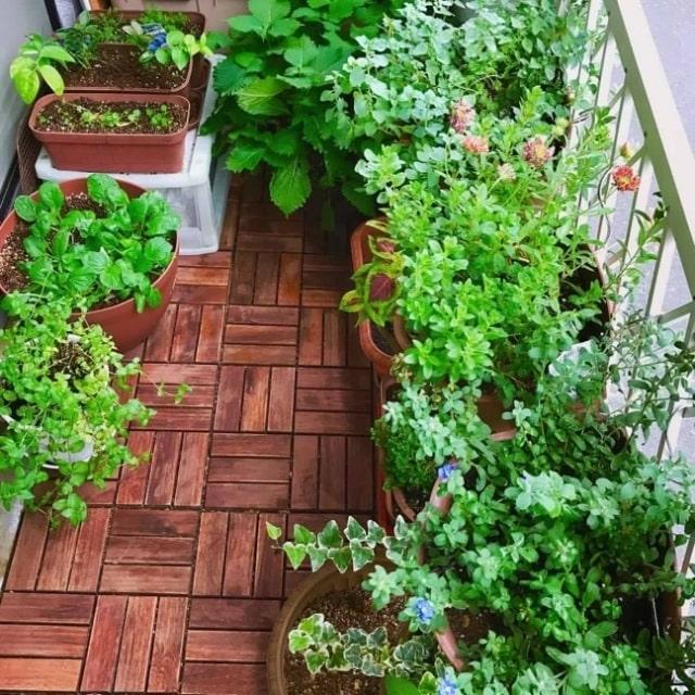 ベランダでやる家庭菜園