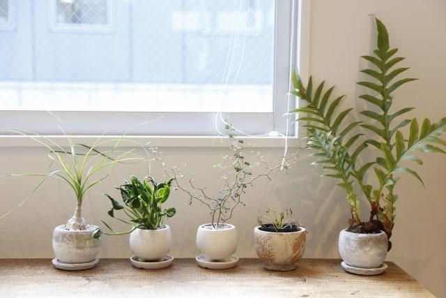 室内で育てる観葉植物