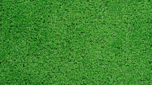芝目がきれいな人工芝